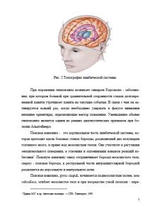 Анатомия головного мозга. Страница 7